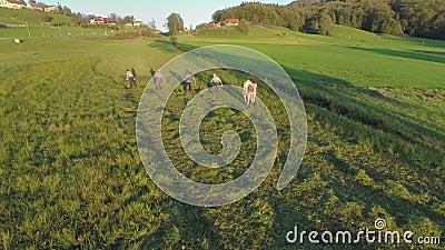 Paar geht zu den Landwirten, wenn sie das Gras mähen stock video
