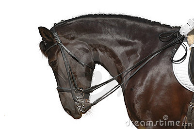 Paard dat op wit wordt geïsoleerde
