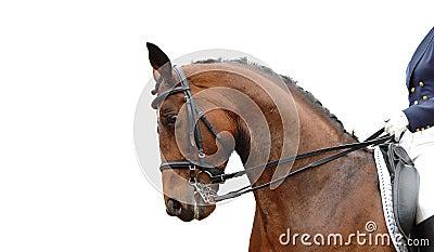 Paard dat op wit wordt geïsoleerdj