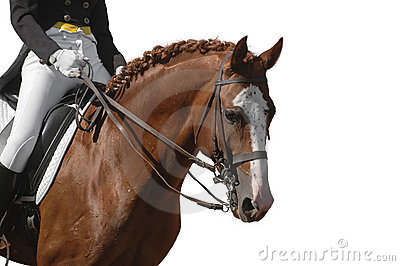 Paard dat op wit wordt geïsoleerdw