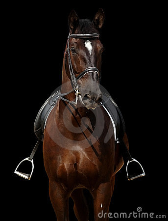 Paard dat op zwarte wordt geïsoleerdr