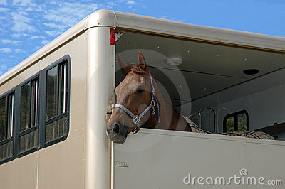 Paard in de aanhangwagen