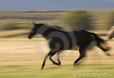 Paard in Motie