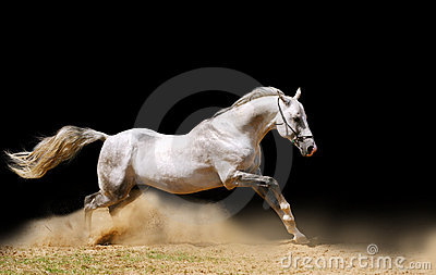 Paard op zwarte