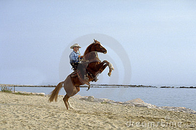 Paard in strand