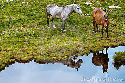 Paarden in bergen