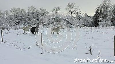 Paarden in de sneeuw stock videobeelden
