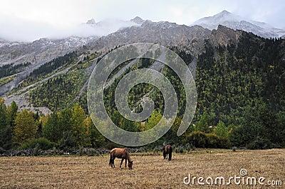 Paarden die door de bergen doorbladeren Redactionele Stock Foto
