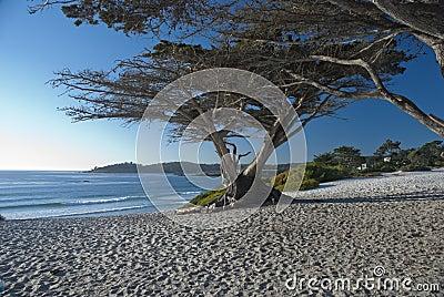The Pacific coast in Monterey, USA