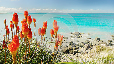 Pacific Coastline and Red Flowers