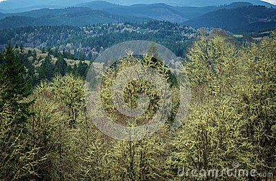 pacific northwest forest desktop  Royalty Free Stock Image: Pacific