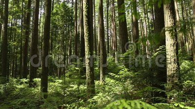 pacific northwest rainforest  pacific-northwest-rain-forest-camera-move...