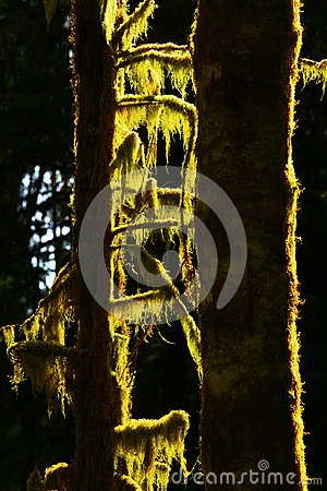 Free Pacific Northwest Rainforest Stock Images - 102608104