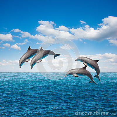 Free Pack Of Jumping Dolphins Stock Photography - 36660982