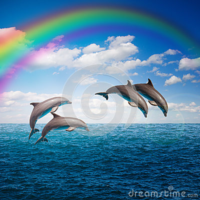 Free Pack Of Jumping Dolphins Stock Images - 51289164
