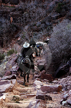 Pack Train,Mules,Grand Canyon