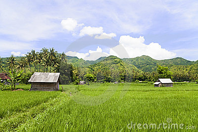 Paddy Field, Amed, East Bali, Indonesia