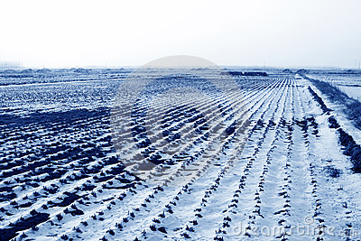 Paddy field natural scenery in the snow
