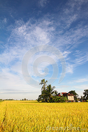 Paddy field village