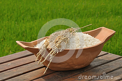 Paddy rice on wood table in rice field background