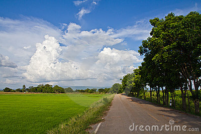 Paddy road
