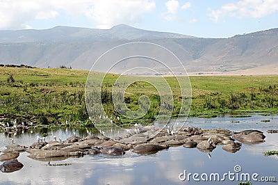 Paesaggio del cratere con gli ippopotami