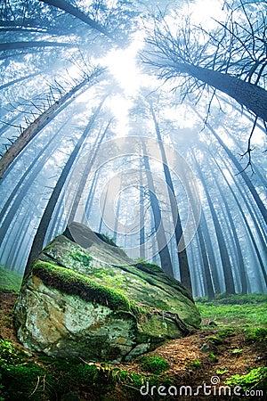 Paesaggio della foresta