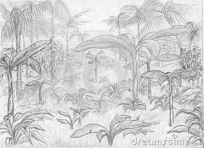 Paesaggio della giungla