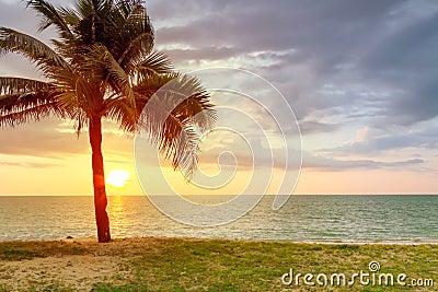 Paesaggio della spiaggia con la palma al tramonto
