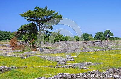 Paestum excavations