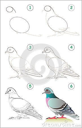 Free Page Shows How To Learn Step By Step To Draw A Cute Pigeon. Developing Children Skills For Drawing And Coloring. Stock Image - 132964071