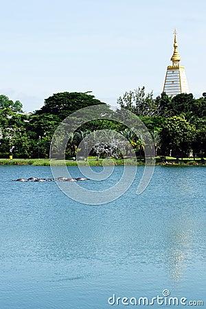Pagodas and gardens