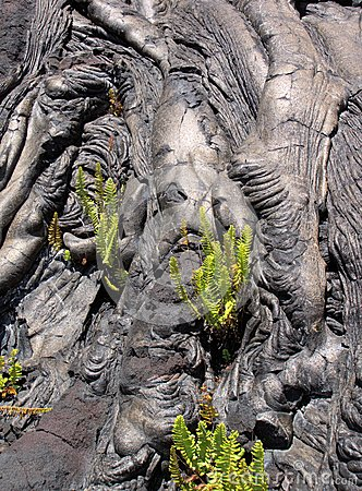 Pahoehoe lava and ferns