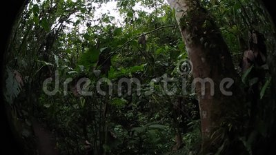 Pahuma-Orchideenreserve