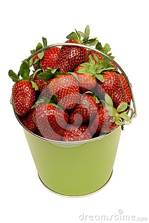 Pail Full of Fresh Strawberries