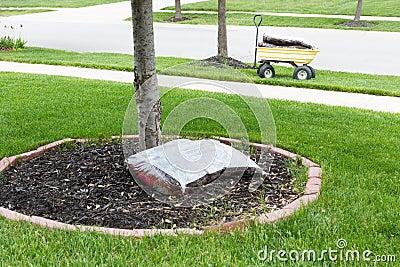 paillage autour du tronc d 39 un arbre photo stock image 54570041. Black Bedroom Furniture Sets. Home Design Ideas