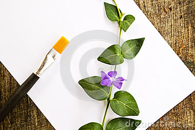 Paint brushes, flower and white paper