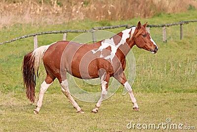 Animal,horse,mare,funny horse,horse riding,mammalia,chordata,animammalia,horse dance,theria,equus,world class animal,pet animal,,white horse