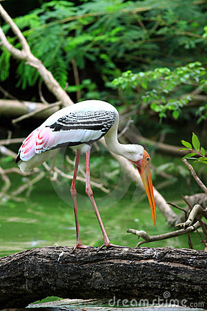 Free Painted Stork Stock Images - 16007744