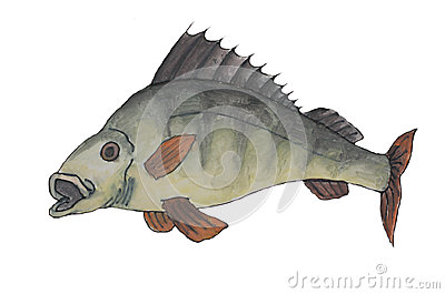 Painting of perch fish
