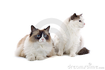 Pair of cute cats