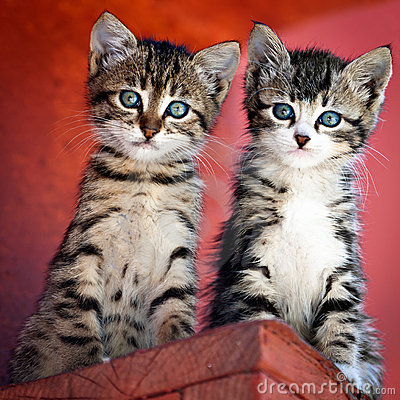 Free Pair Of Kittens Stock Images - 20028164