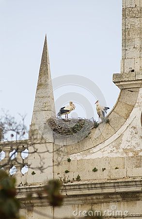 Free Pair Of Storks Royalty Free Stock Photo - 25457205