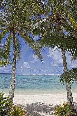 Pair of Palm Trees on Tropical Beach