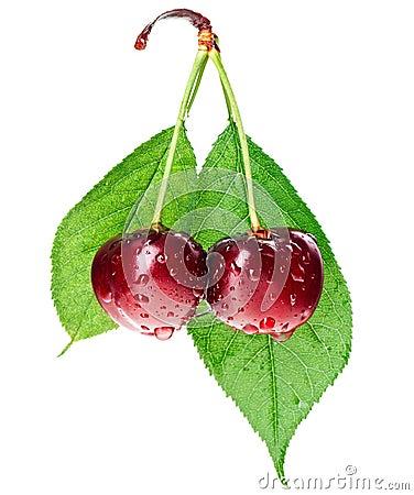 Pair of red wet cherry fruit on stem