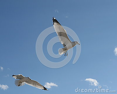 Pair of seagulls in blue sky