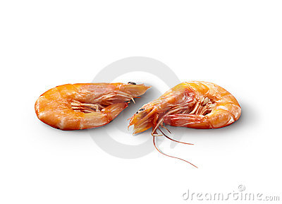 Pair of shrimp