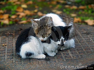 Pair of small cats