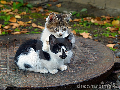 Pair of small kittens