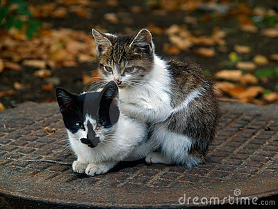 Pair of small kitty
